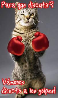 imágenes con frases graciosas de gatos