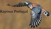 Forum de Aves de Rapina em Portugal