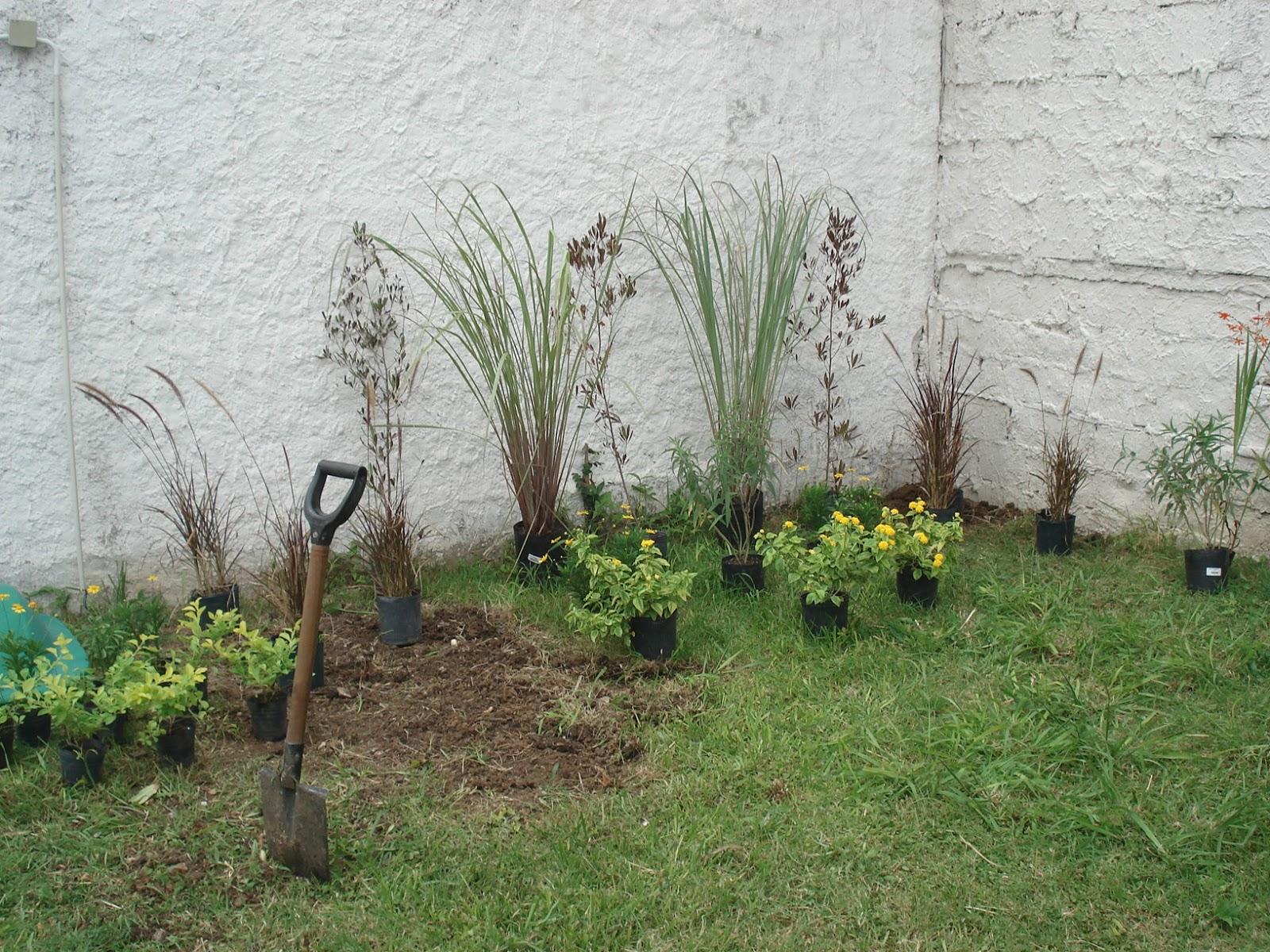 Reverdir jardineria y paisajismo jardin con medianera for Plantas paisajismo