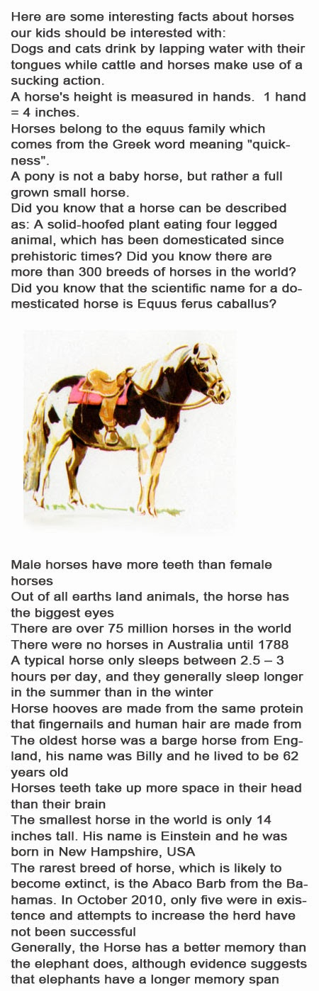 Facts about horses for kids