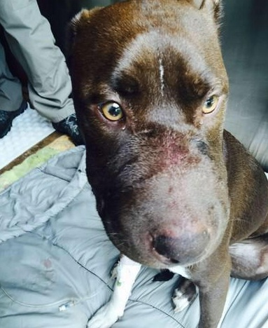 Caitlyn Dog with muzzle taped shut
