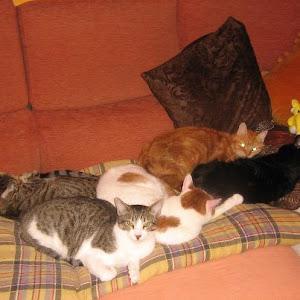 Os meus meninos todos juntinhos no sofá, são a minha paz...o meu equilibrio...o meu mundo!