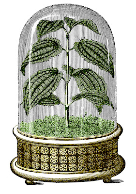 Vintage Images Cloche Plant Graphic Color