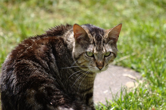 another anonymous tabby cat