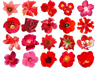 Names of Red Flowers and Picture