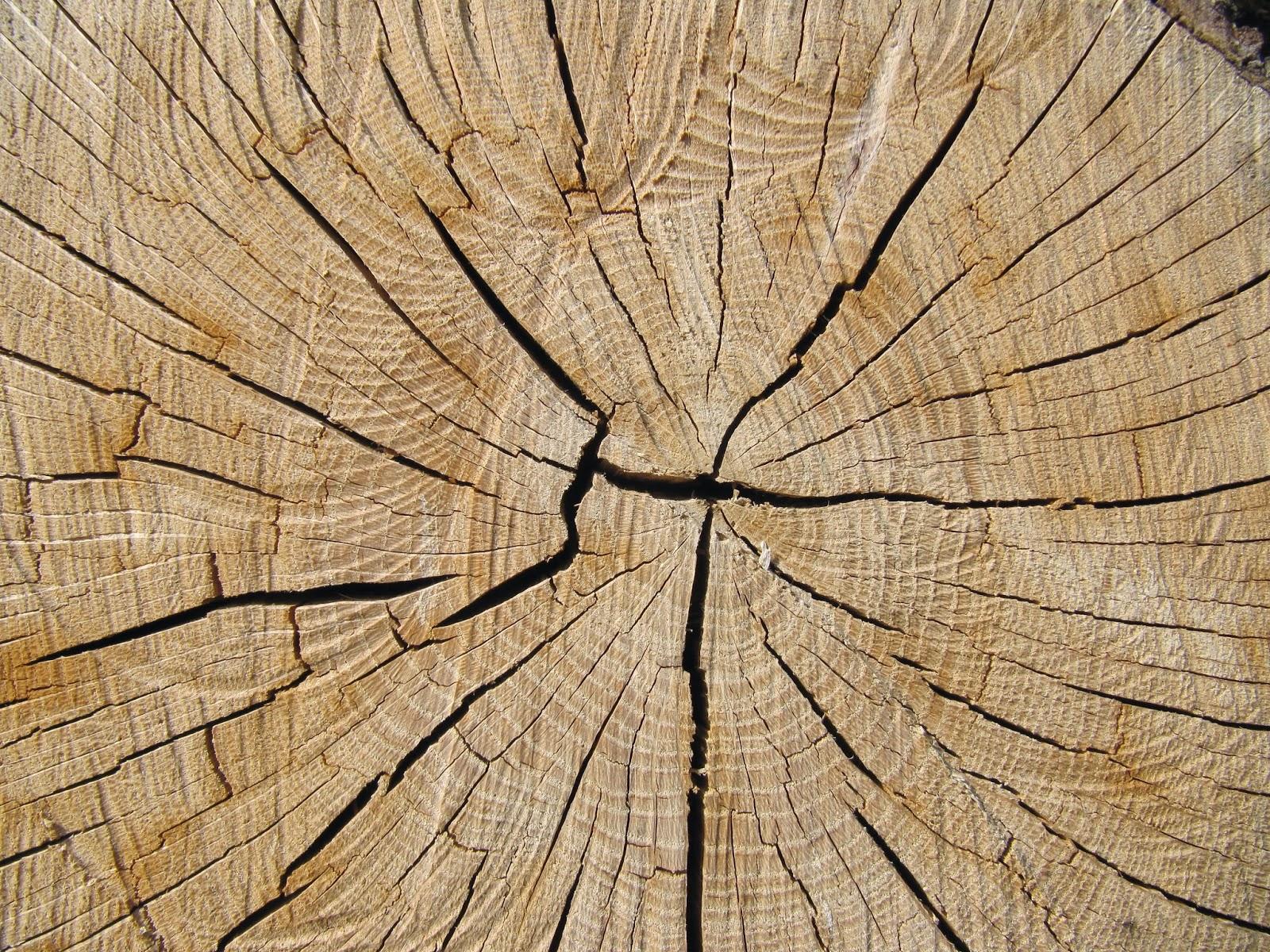 LE MAXIMUM: Stries du bois - Texture te fond d'écran gratuit