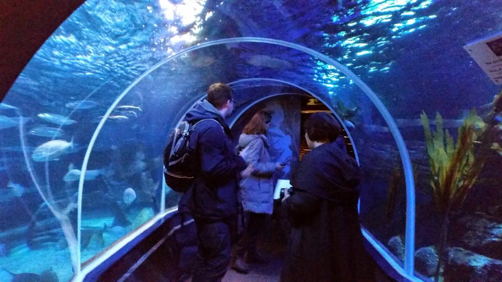 Aquarium Seepferdchen Kosten  W plasma testberichte vortrge meerwasser forum