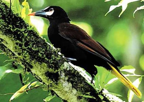 gambar burung termahal di indonesia
