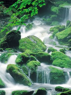 Free Green Nature Wallpaper For Mobile Phone Wallpaper Image For