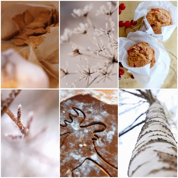 #winter, #christmas, #frost, #gingerbread, #birch