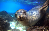 Sea lion (Credit: Shutterstock) Click to Enlarge.
