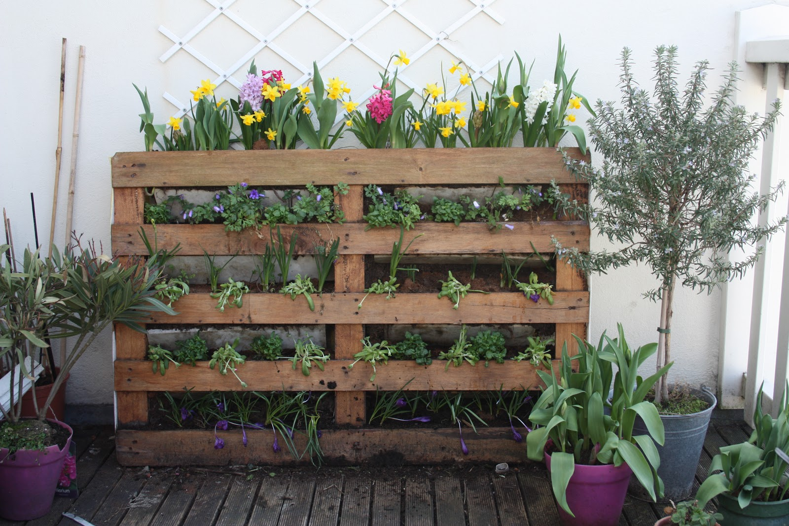 Tuinieren Op Balkon : Hippe huisvlijt tuin en balkon