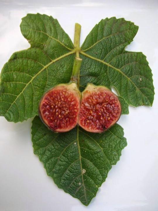 Figs : Blue Celeste