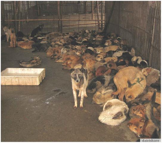 Jom Lihat Pasar Jual Daging Anjing Di China