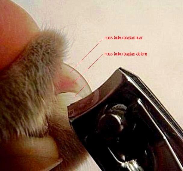 Как подстричь когти коту