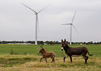 Wind turbines in Calumet, Okla. Bigger machines could make faster winds at higher altitudes an economical source of electricity. (Credit: Sue Ogrocki/Associated Press) Click to Enlarge.