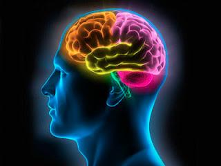 Dalam Al-Quran : Otak Adalah Pengendali Gerak Kita