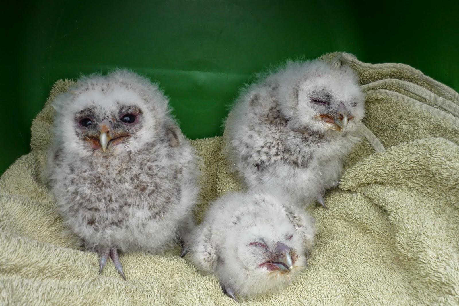 Ryedale Wildlife Rehabilitation Birds Of Prey