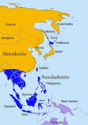 sinodont sundadont map