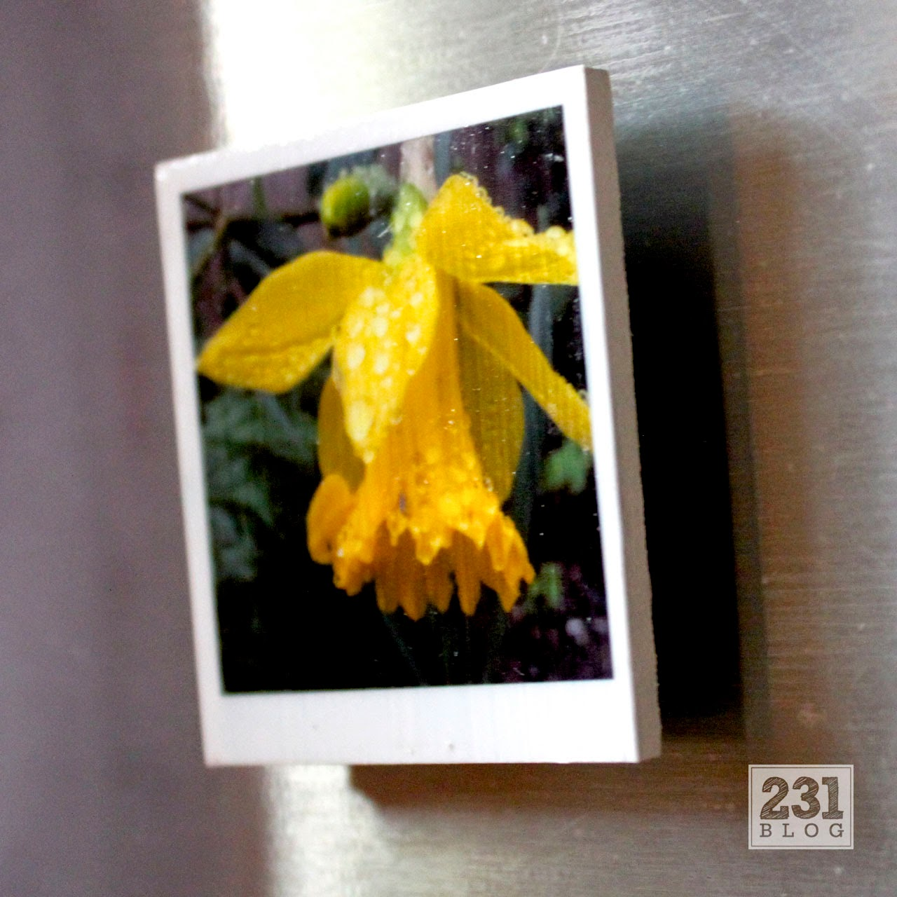 CIY Polaroid Style Magnets using Instagram Photos