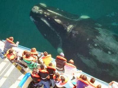Bucear con ballenas,delfines