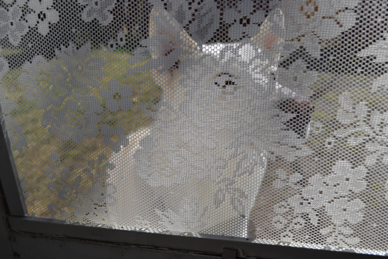 lace screen