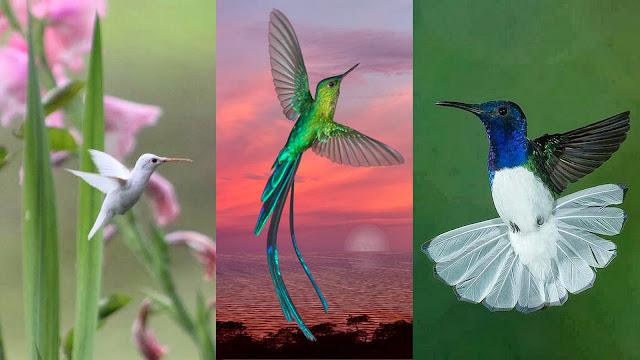 Hummingbirds enjoying their free fly