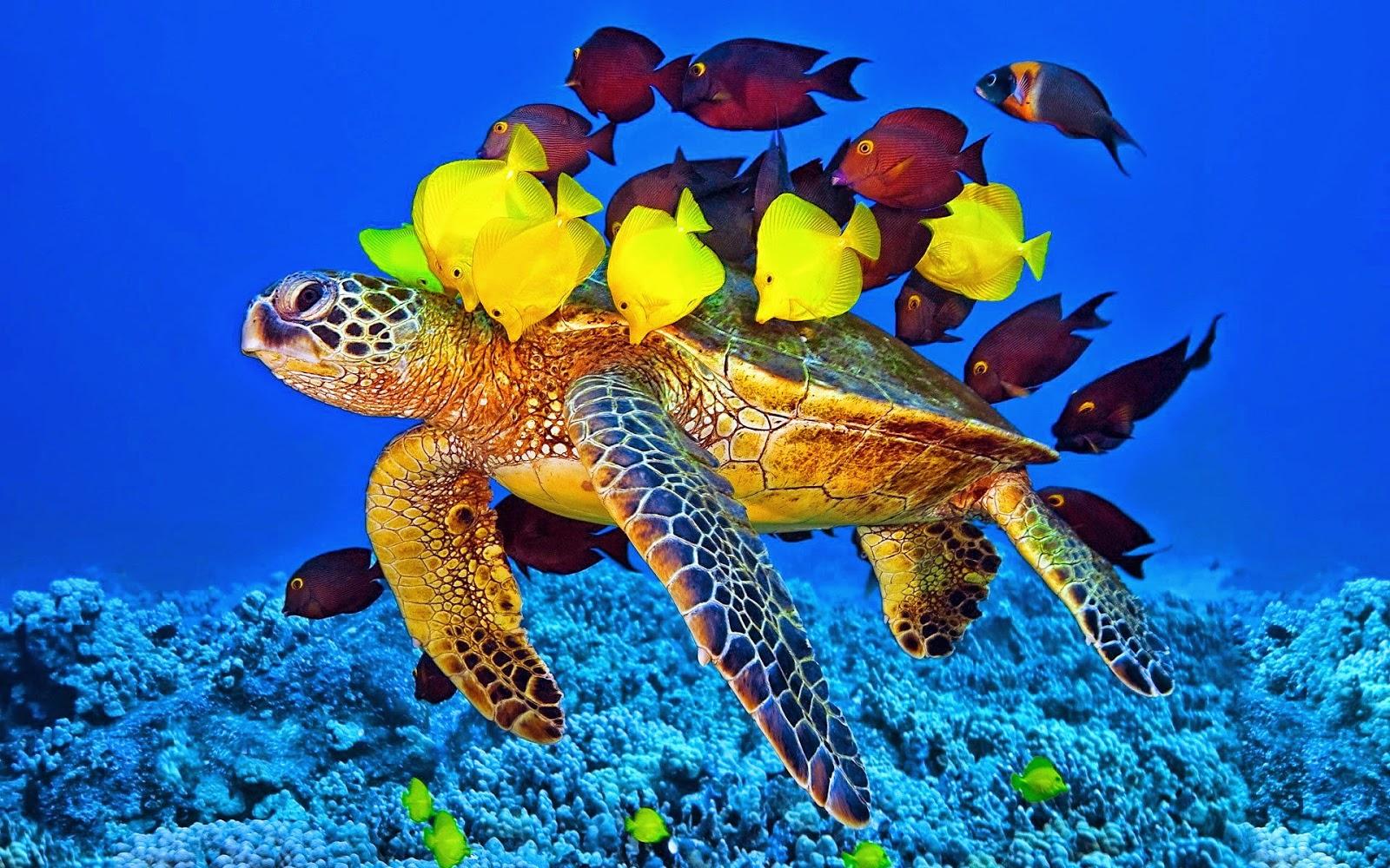 Turtle Beach Bonaire