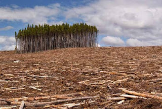 Lotta alla deforestazione: al via i controlli sul legno