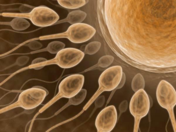 The purpose of killer sperm