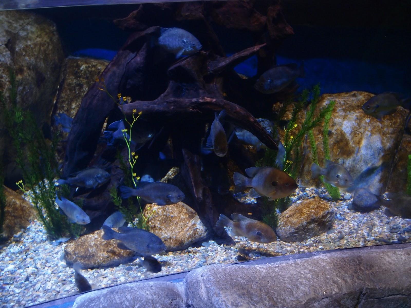 Sasaki Time Legoland Sea Life Aquarium Trip Report