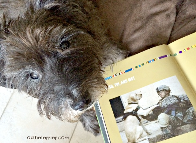 Oz the Terrier reads through the book Reporting for Duty which profiles disabled veterans and their service dogs