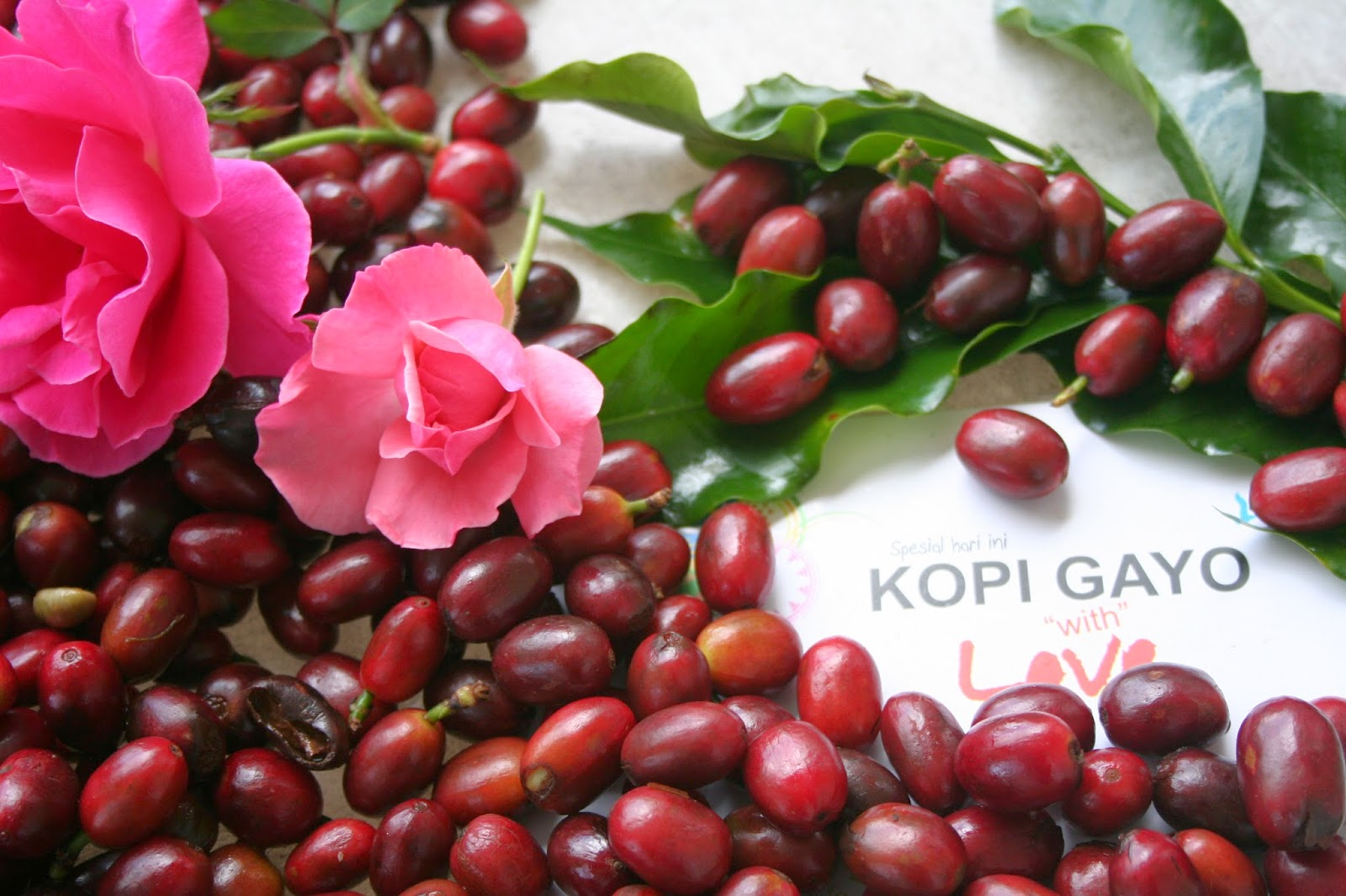 Coffee Lovers October 2014 Kopi Robusta Premium Gayo Land Arabica Is Rather Large And Dark Green Oval Leaves Trees Reaching Seven Meters High But In Plantations Tree Height Kept To A Range Of