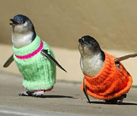 Funny Animals Clothing Photos