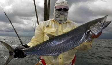 Mancing Ikan Tenggiri Di Kira Ikan Jerong