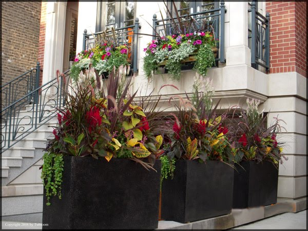The Beauty Of Flower Boxes