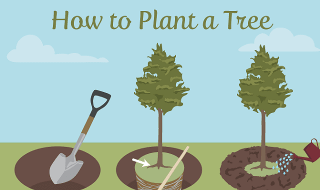 Selecting the Right Tree for Your Garden