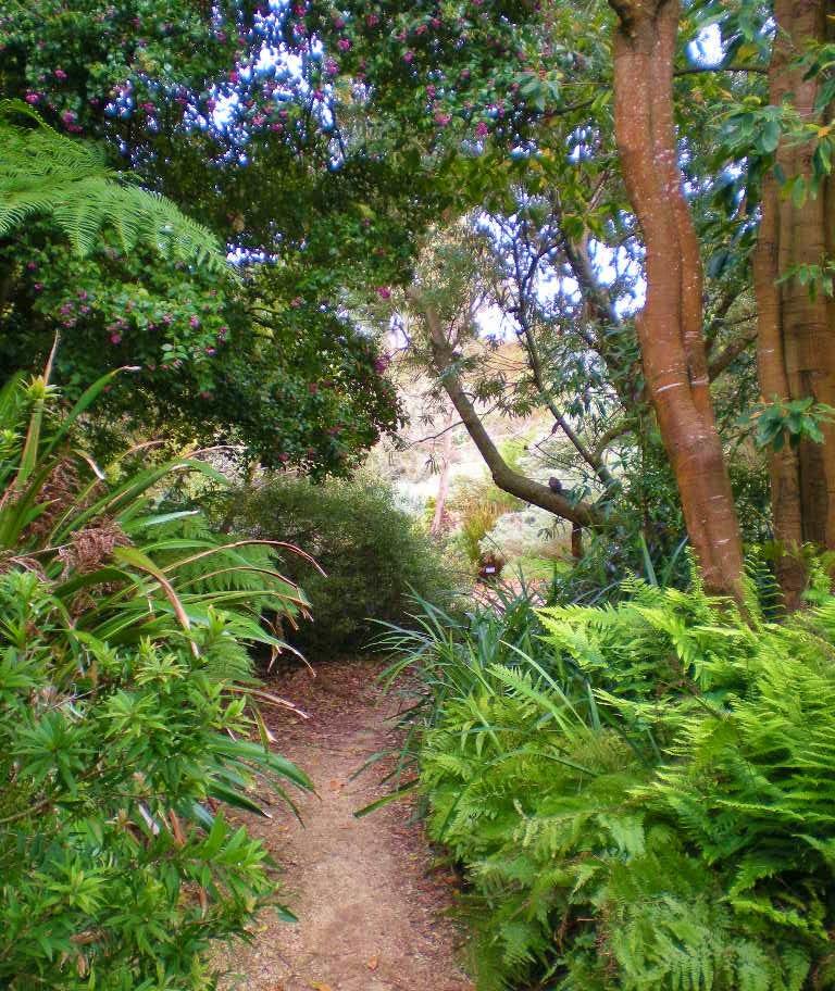 Seattle Urban Landscape San Francisco Botanical Garden