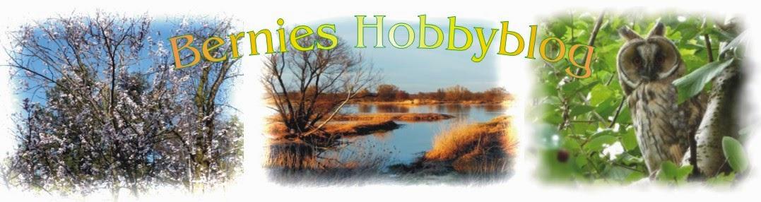 Bernies Hobbyblog
