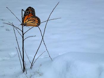 La Liberté Fragile du Papillon ...