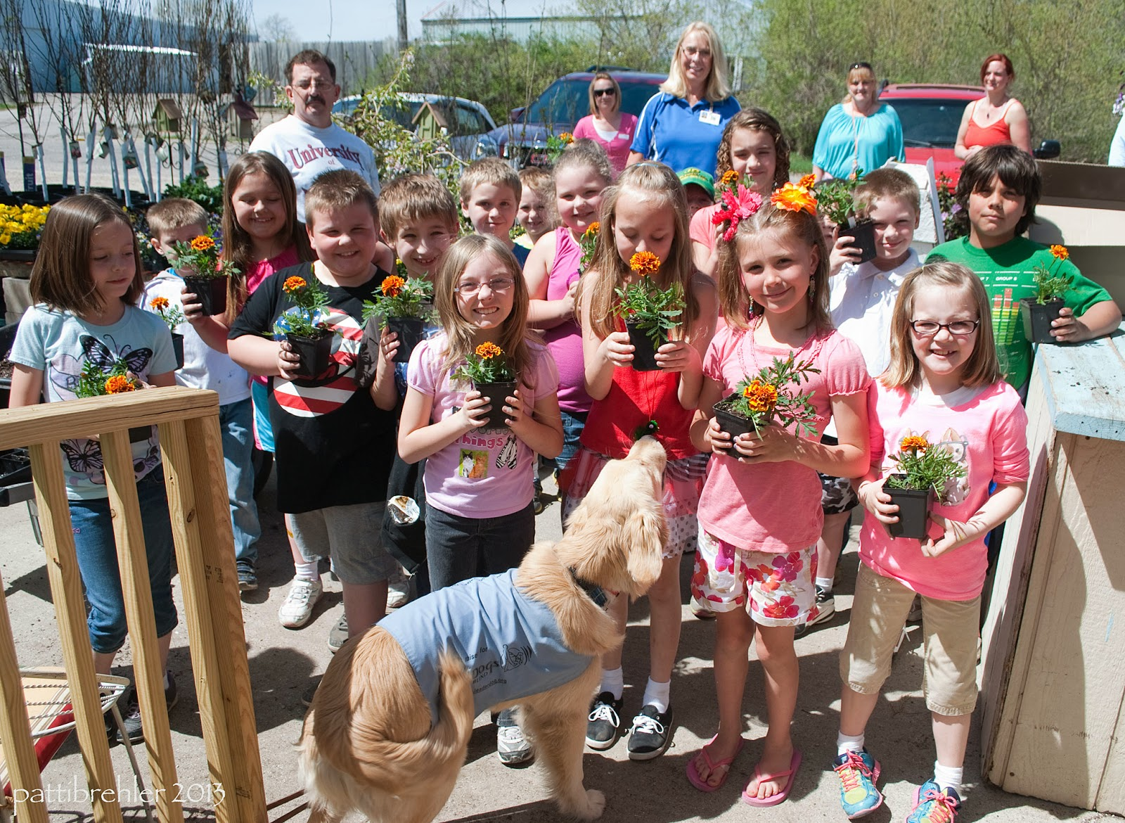 A large gorup of second graders pose outside in the sun with a golden retriever, who is standing in front of them looking at them and not the camera. All the children are holding marigolds that they had potted for their mothers for mother's day. There are five adults (one man and four women) standing in the background.