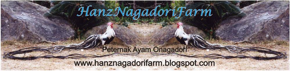 HanzNagadoriFarm   Jual Ayam Onagadori   Ayam Ekor Panjang