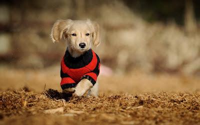 Cachoro coriendo por el bosque en otoño