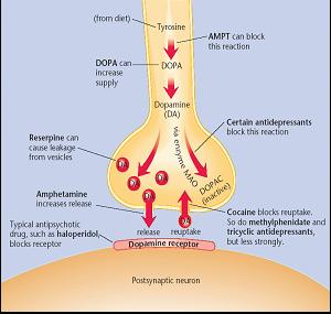 Gambar.2. Obat yang bekerja pada sistem Dopaminergik. 8