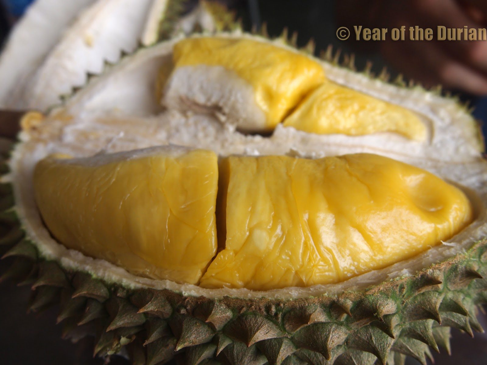 How to Identify Musang King and D24