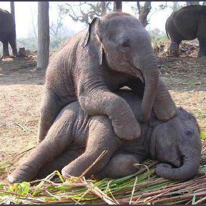Fotos de todos los beb s del reino animal dos elefantes - Fotos de elefantes bebes ...