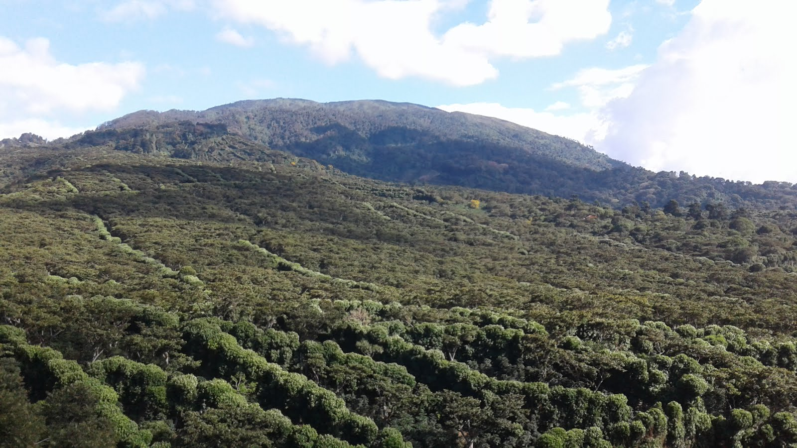 Volcán de Santa Ana, Ilamatepec