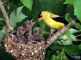 passaro alimentando seus filhotes no ninho
