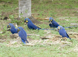 World Travel Agency travel the World RTW -family activities Budget Travel Hyacinthine Macaw
