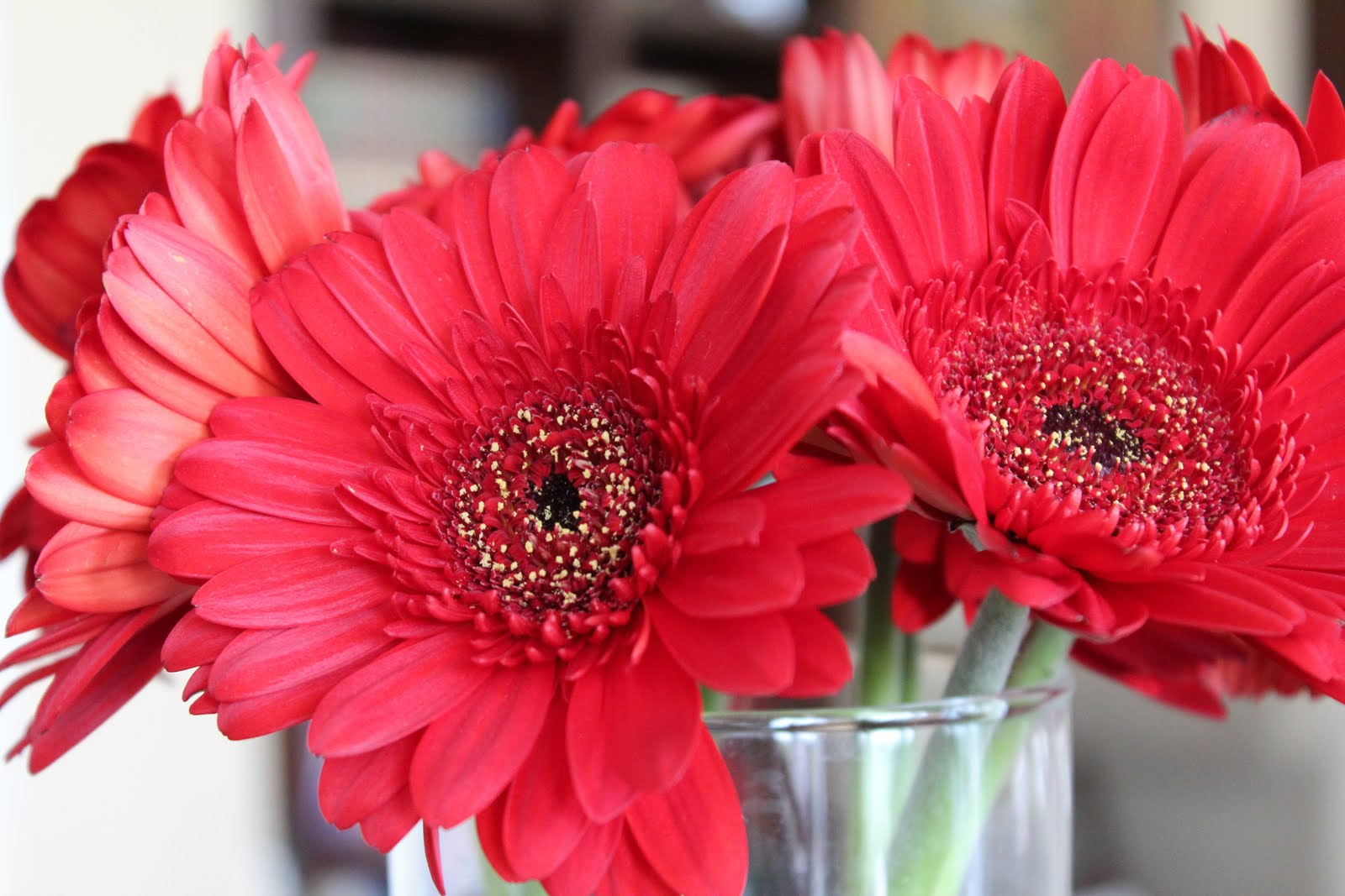 Beautiful motivation motherhood and more i walked into trader joes the other day and this bouquet of gerbera daisies looked up at me and begged me to buy them i love fresh flowers love them izmirmasajfo Gallery